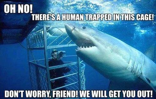 http://www.justlaugh.com/wp-content/uploads/2012/11/shark_cage.jpg
