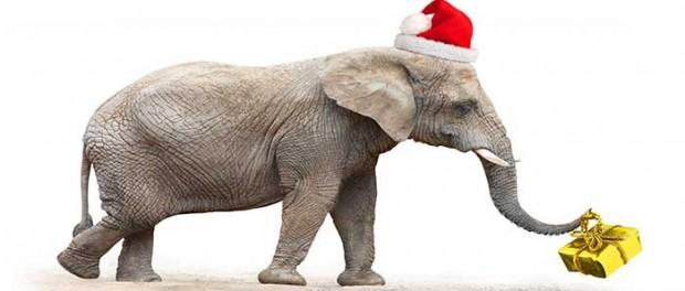 20141224_santa-elephant_71012217