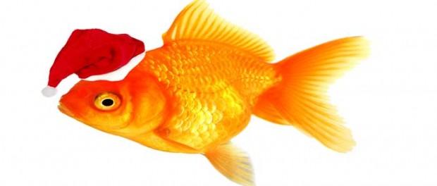 20141224_santa-goldfish_27386511