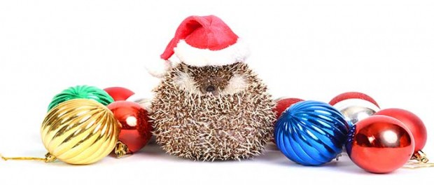 20141224_santa-hedgehog_70418262