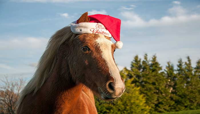 http://www.justlaugh.com/wp-content/uploads/2014/12/20141224_santa-horse_46883790.jpg