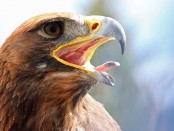 20150228_mightyeagle_72594658