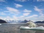 20150516_climatebears_15356288