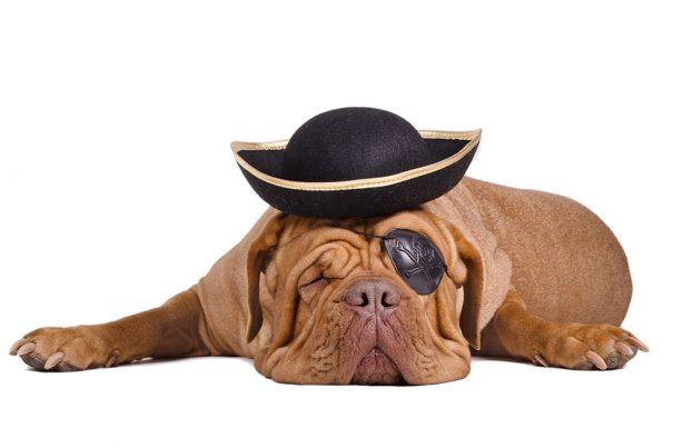 20161017_dogcostumes-sailor_31185505