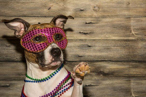 20161017_dogcostumes-sexy_102271024